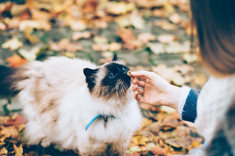 Les principales raisons pour lesquelles petTracer GPS chat est si unique